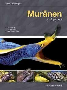 Marco Lichtenberger: Muränen im Aquarium, Buch