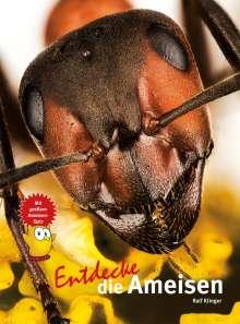 Ralf Klinger: Entdecke die Ameisen, Buch