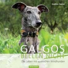 Gudrun Sauter: Galgos bellen nicht, Buch
