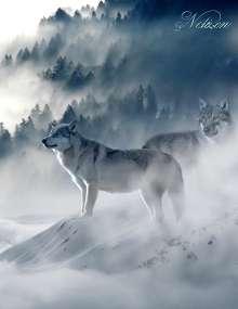 Samuriel Sternenfeuer: Fantasy Notizbuch: Wölfe im Nebel - weiße Seiten mit Eckmotiv, Buch