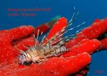 Norbert Probst: Faszinierende Welt unter Wasser 2017, Diverse
