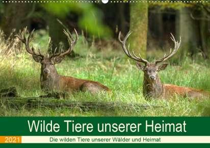 Roland Brack Wilde Tiere Unserer Heimat Wandkalender 2021 Din A2 Quer Kalender Jpc