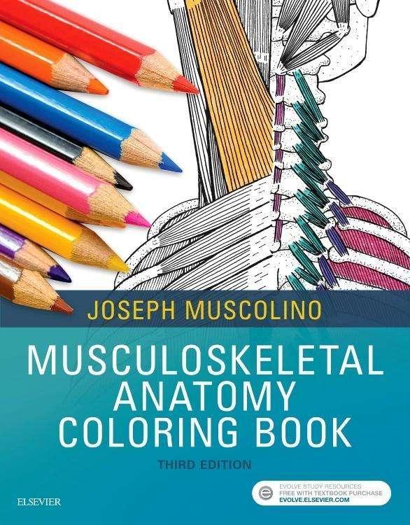 Musculoskeletal Anatomy Coloring Book - Joseph E. Muscolino (Buch) – jpc