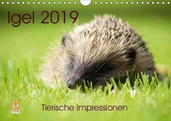 Lehmann Hrsg Steffani Igel 2019 Tierische Impressionen Wandkalender 2019 Din A4 Quer